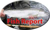 SW Washington Fish Report, Cowlitz River, South Fork Toutle, Tilton, Lake May Field