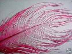 Rhea Plume Feathers - Product Image