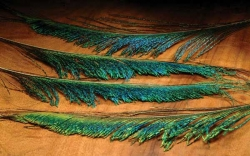 Peacock Swords - Product Image