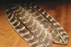 Mottled Turkey Quills - Product Image