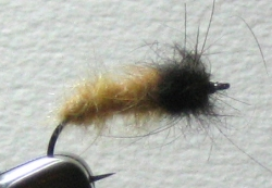 October Caddis Larva - Product Image