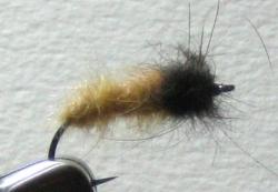 October Caddis Larva - Product Image