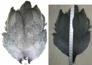 OUT OF STOCK Jumbo Guinea Skins - Product Image