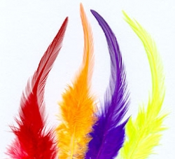 Saddle Hackle - Product Image